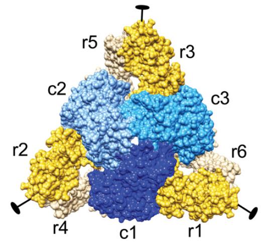 Structure of Aspartate transcarbamoylase