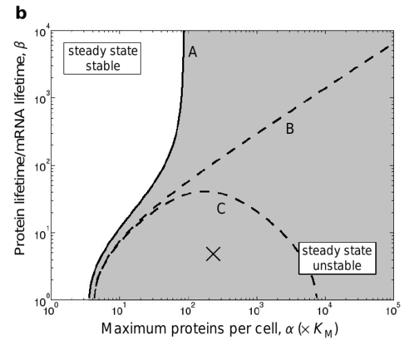 Stability of the repressilator