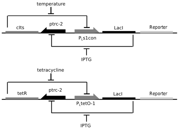 Structure of the repressor based toggle switches
